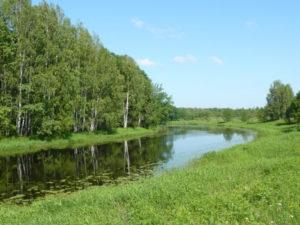 Посещение Государственного природного заповедника «Большая Кокшага» в районе п. Старожильск